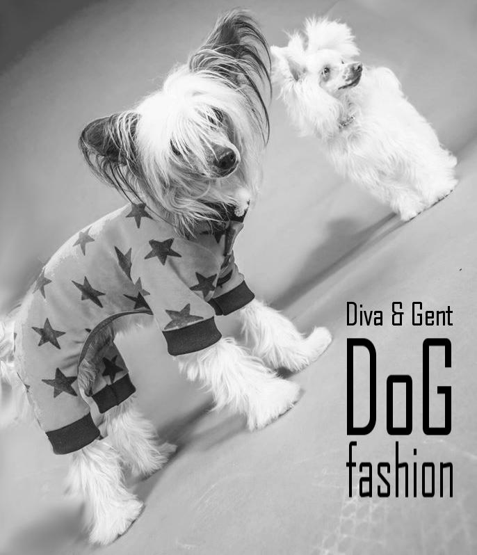 Diva und Gent Dogfashion