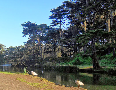 San Francisco; Golden Gate Park; Estados Unidos; California