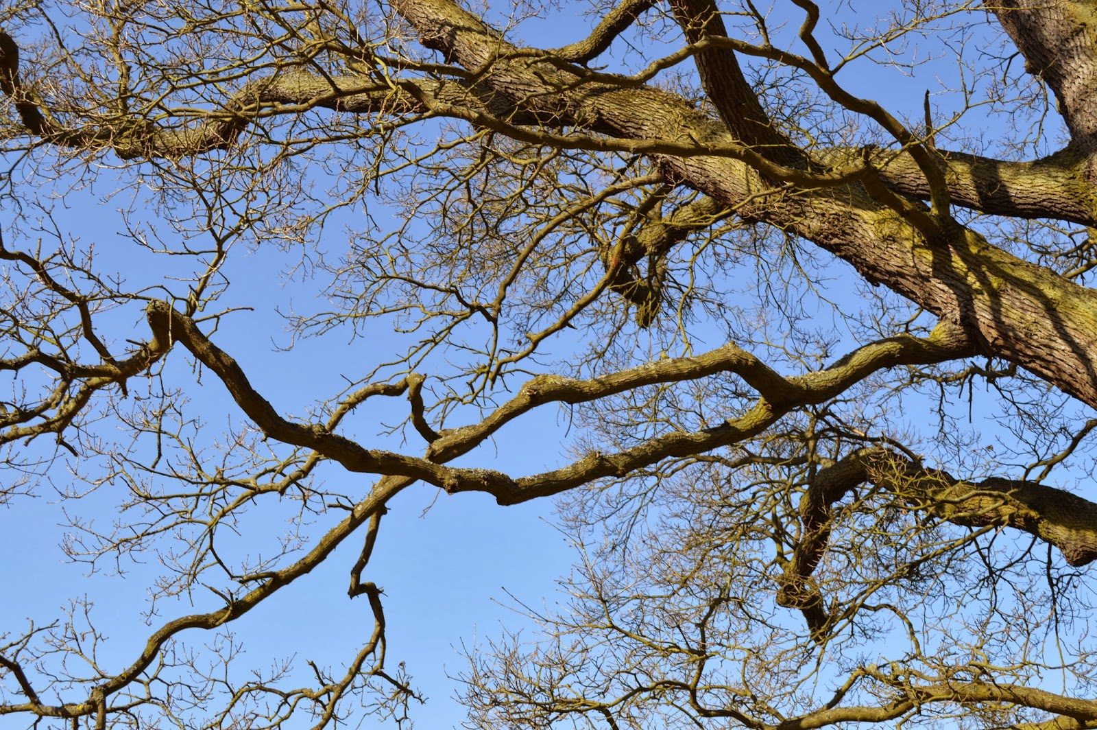 Essex, Chelmsford, local, walk, park Hylands House, day out, dog walking, sunshine, building architecture, V festival, fields, flint cottage, tree, blue sky,
