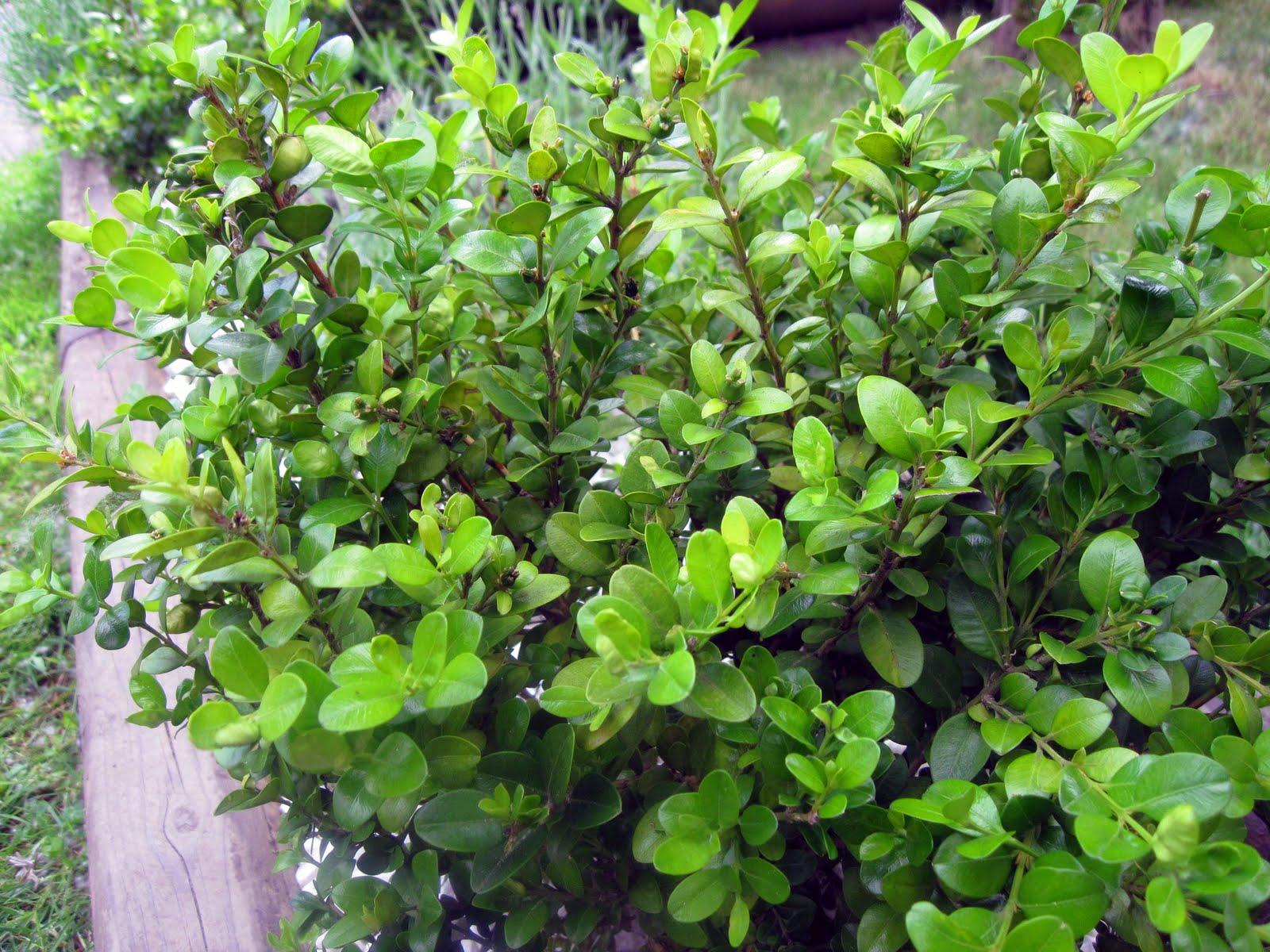 Living Food Junkie: Gardening Days - 337.9KB