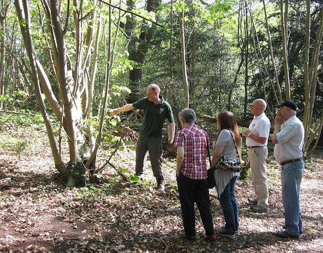 Barry Gutteridge pointing out a pollarded small-leaved lime to the group. It has also sprouted from the base. Spring Park, 22 April 2011.
