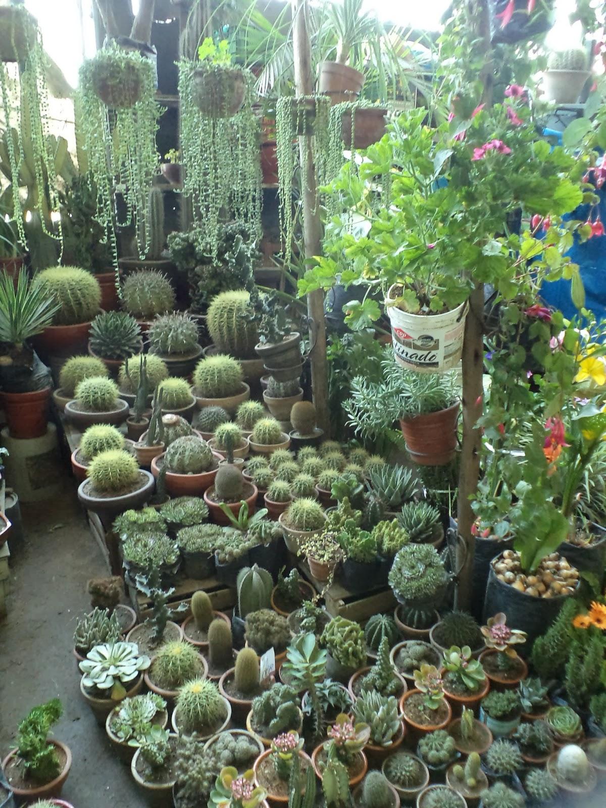 Alternativa ecol gica donde puedo comprar plantas for Donde venden cactus