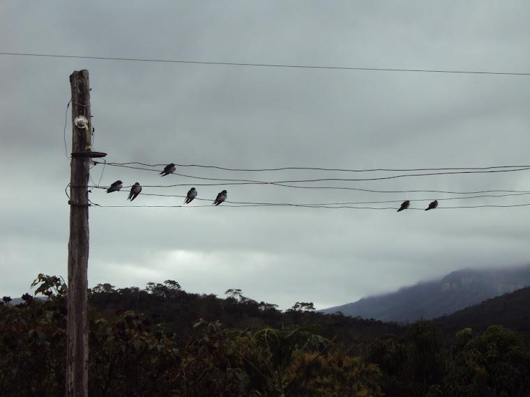 Passarinhos no poste, olhando a paisagem...