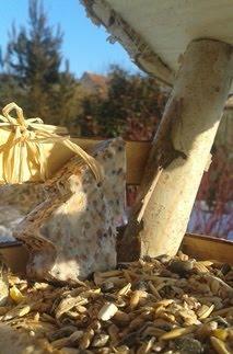 Přikrmování ptáčků