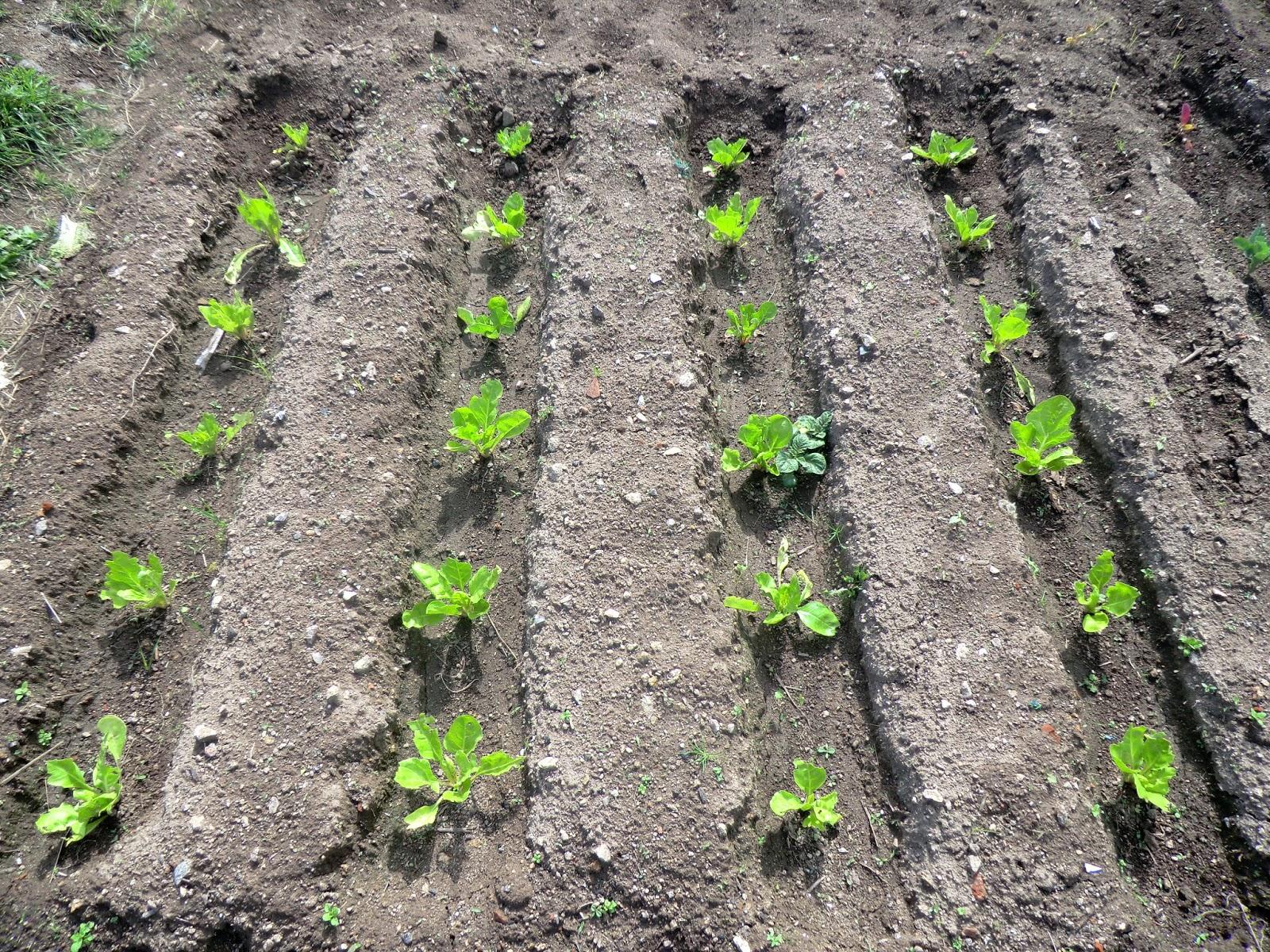Con vistas al huerto for Como cultivar hortalizas