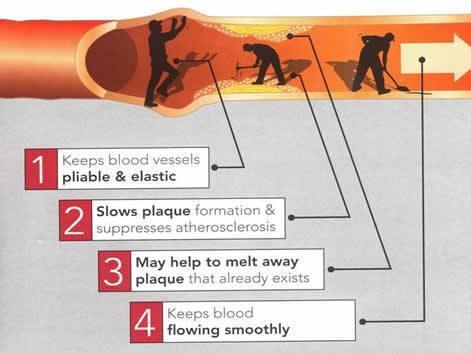 Оксид азота: реально расслабляет ваши сосуды.