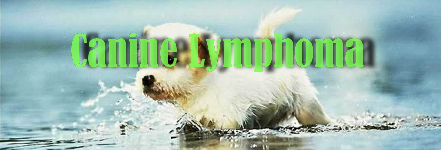 Canine Lymphoma