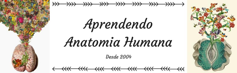 Aprendendo Anatomia Humana