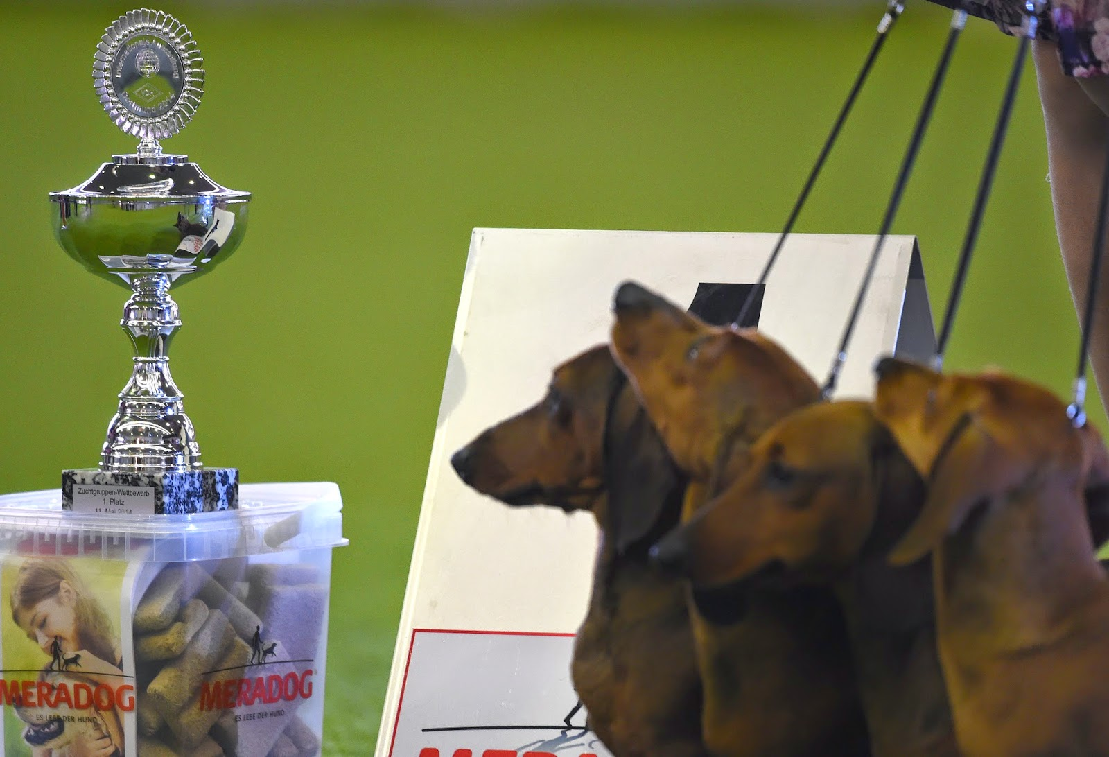 International Dogs and Cats Show