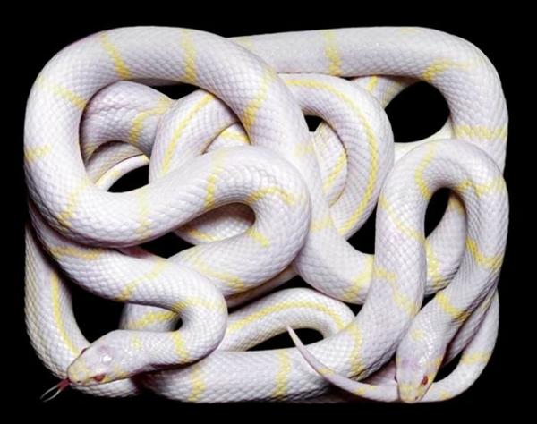 http://1.bp.blogspot.com/-7RIIVGcTSRA/TpbPjp0NpWI/AAAAAAAADAs/TL18ehkGY1c/s1600/256709%252Cxcitefun-fascinating-snakes-04.jpg