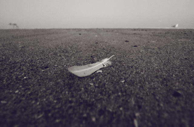Gentle: feather on the beach. Spring Lake, New Jersey, © 2012 Amber Schley Iragui