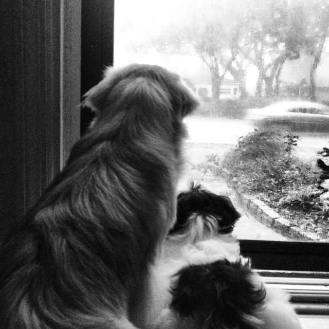 Can I Walk With My Dog Rain Day