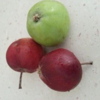 elma elma almanın faydası
