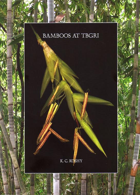 Bamboos at TBGRI