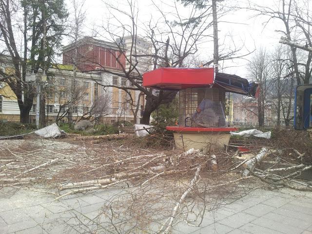 Изпотрошена от паднали клони будка в Габрово