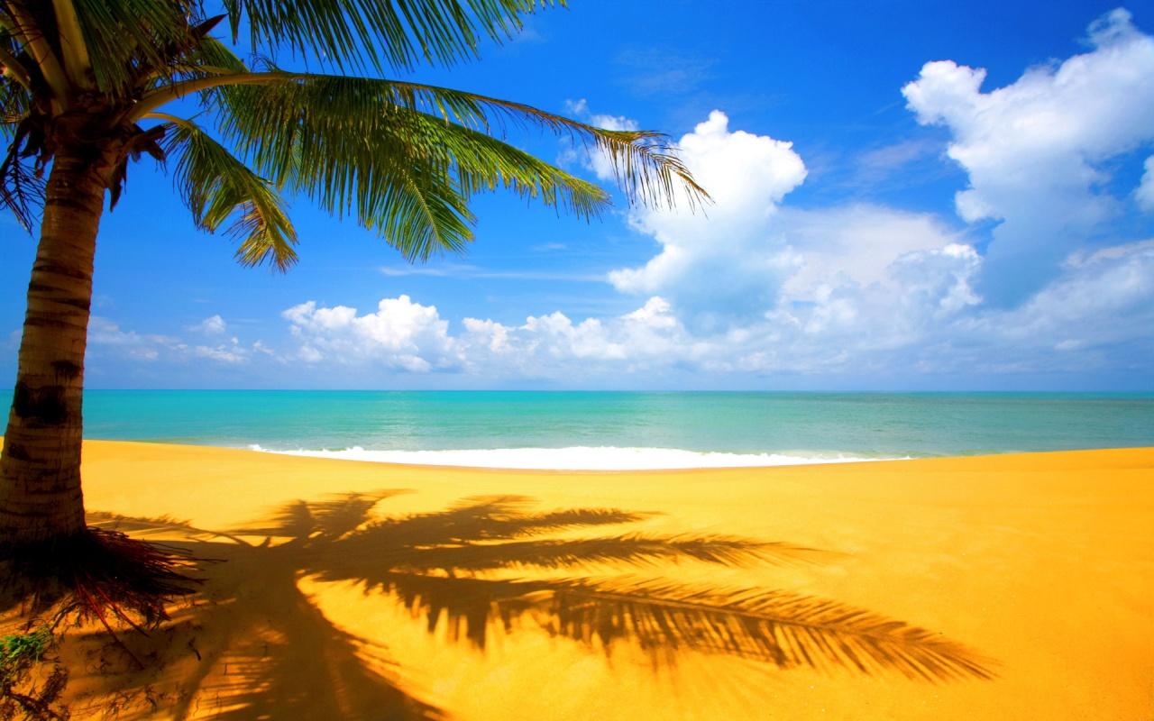 http://1.bp.blogspot.com/-7S1qrFJmcwM/Tar2OgGiBNI/AAAAAAAAGog/S7ZRQnwvfQY/s1600/tree_beach_side-1280x800.jpg