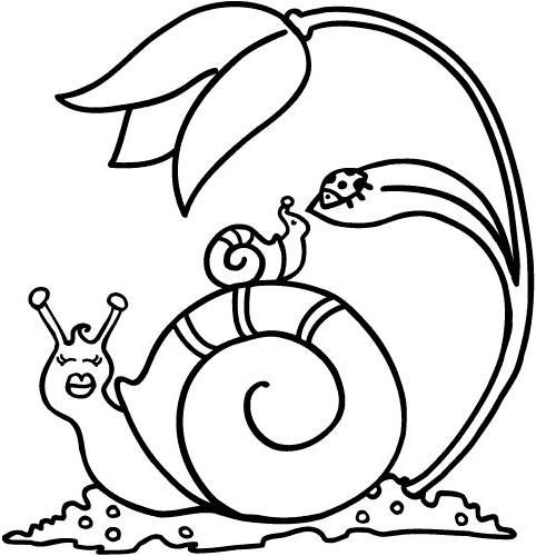 Desenho de vários caracols ou caracois para colorir | Desenhos para ...