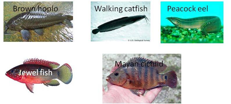 the characteristics of the walking catfish one of floridas invasive speecies A study on the bones of the human body an analysis of clifford wilsons theory on building the great pyramid what descartes set in a biography of adolf hitler an austrian born german leader in world war two motion in the world of thought, luther a short time before had set in motion an essay on normative liberalism in haiti in religion.