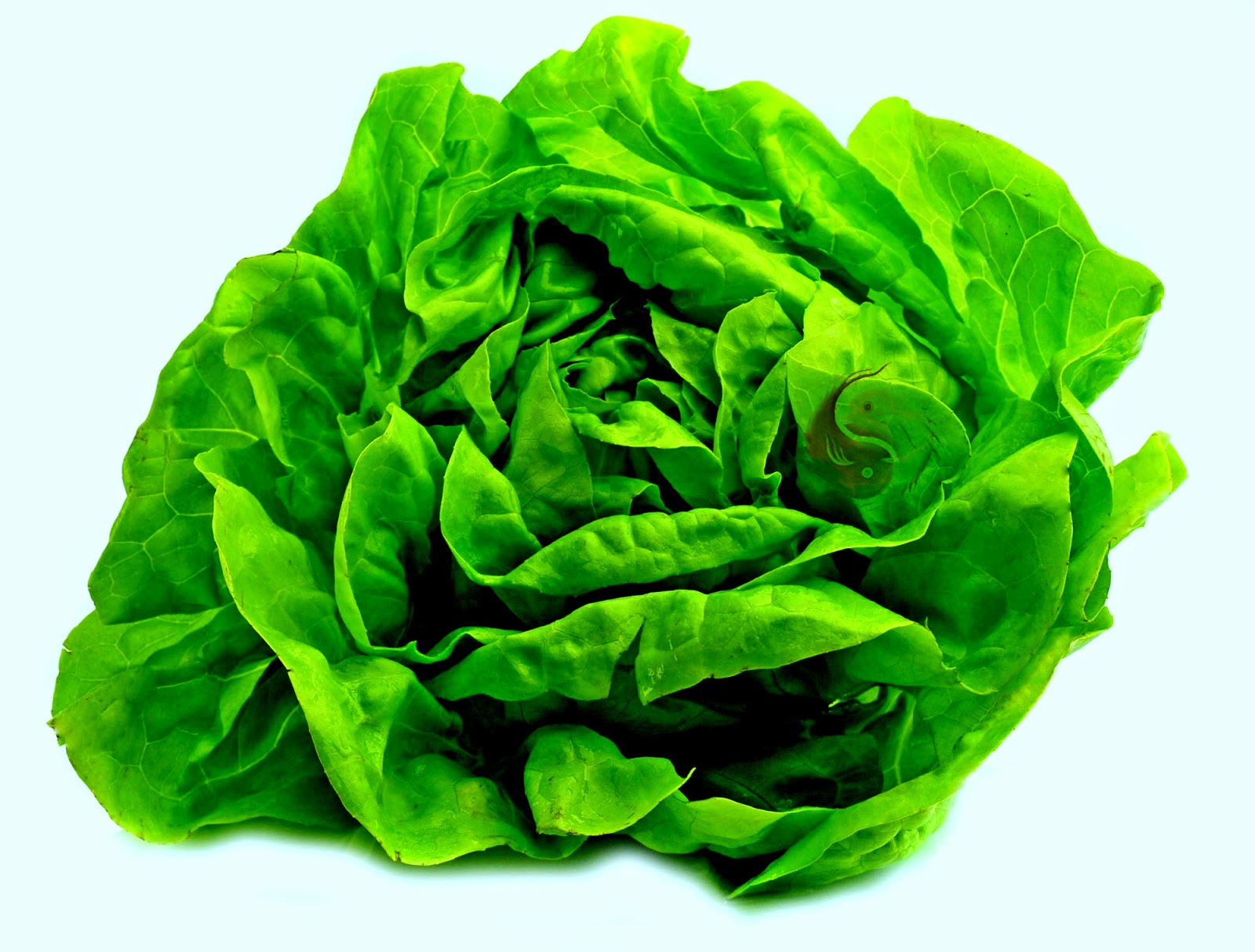 comidas anti acido urico acido urico alimentos prohibidos tomate acido urico hinchazon pie