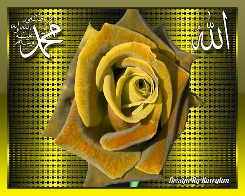 [Resim: allah-muhammed-yazili-sari-gul.png]