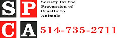 Call SPCA
