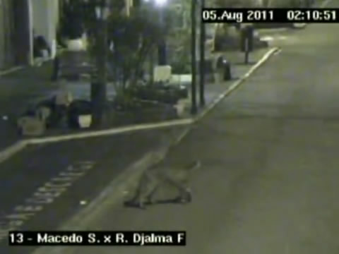 Jaguar spotted cruising city streets in Campos do Jordao, Sao Paulo, Brazil during the pre-dawn hours by police CCTV