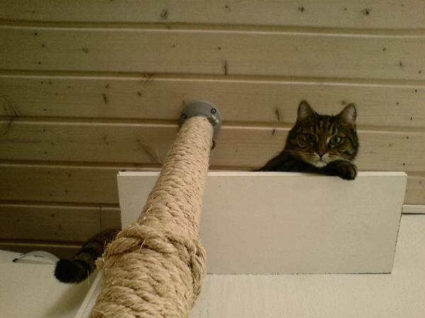Fabrica un incre ble rascador de suelo a techo con ikea for Muebles para gatos ikea