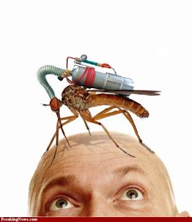 Inilah yang terjadi apabila nyamuk punah
