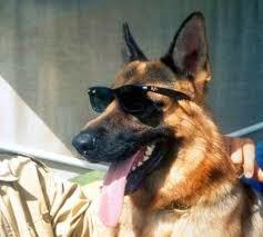 Anjing Terkaya di Dunia