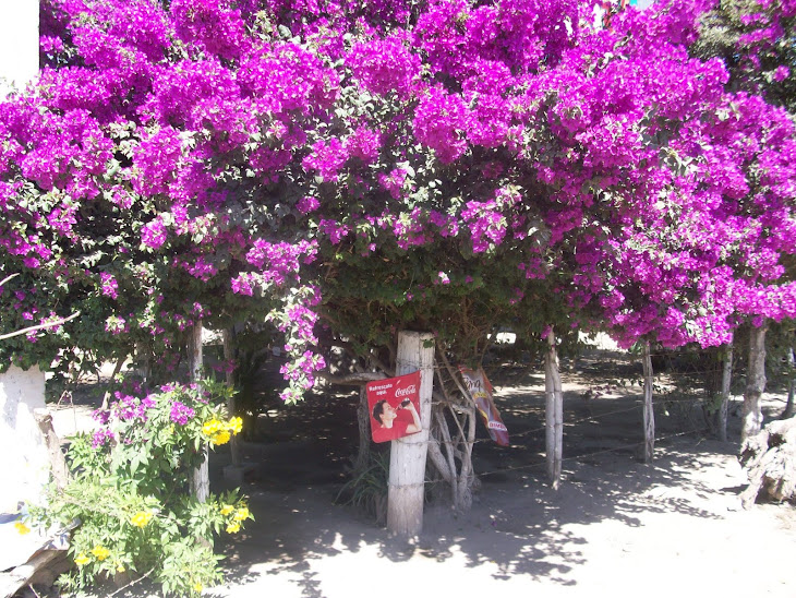 Puerta de acceso a una tiendita en Navito