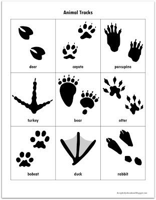 Genius image with printable animal footprints