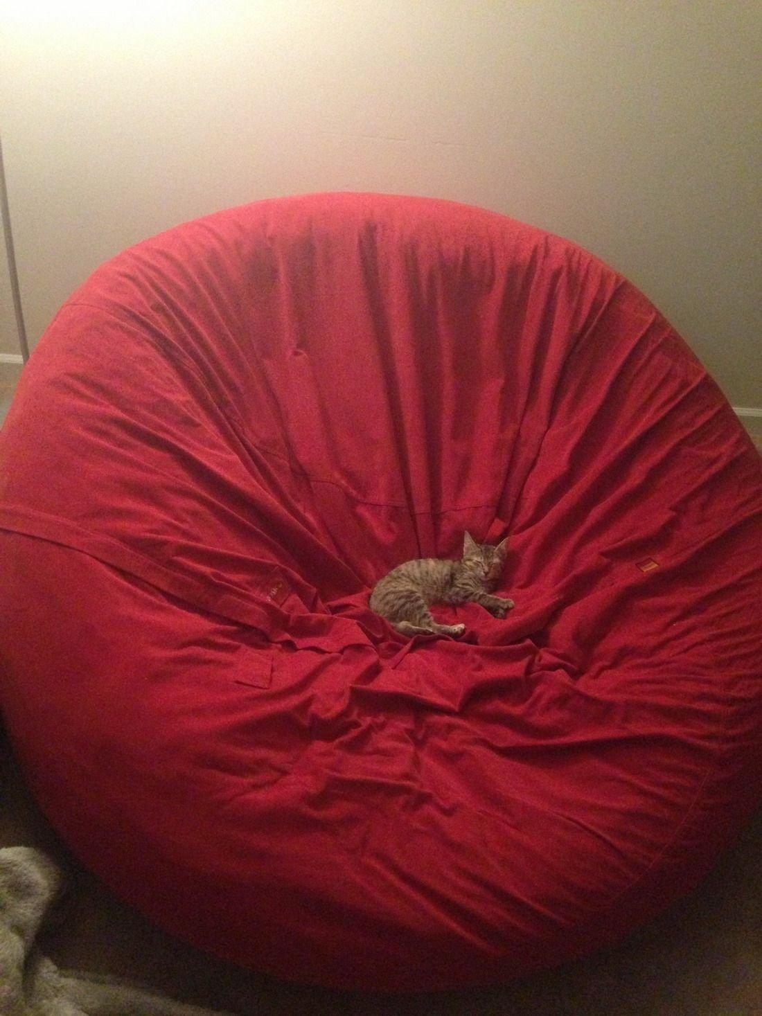 Слишком большое кресло для котенка