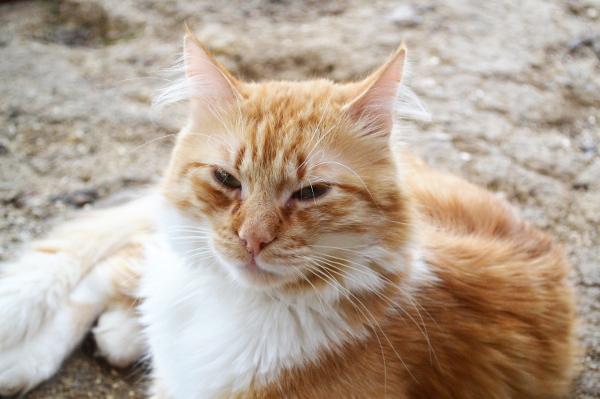 Exceptionnel Art et glam: La beauté du chat roux OL15