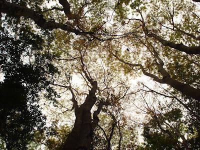 Bohol Manmade Forest_05