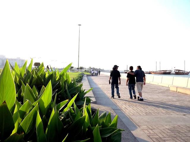 Grass along the Corniche Qatar Photos,Pictures