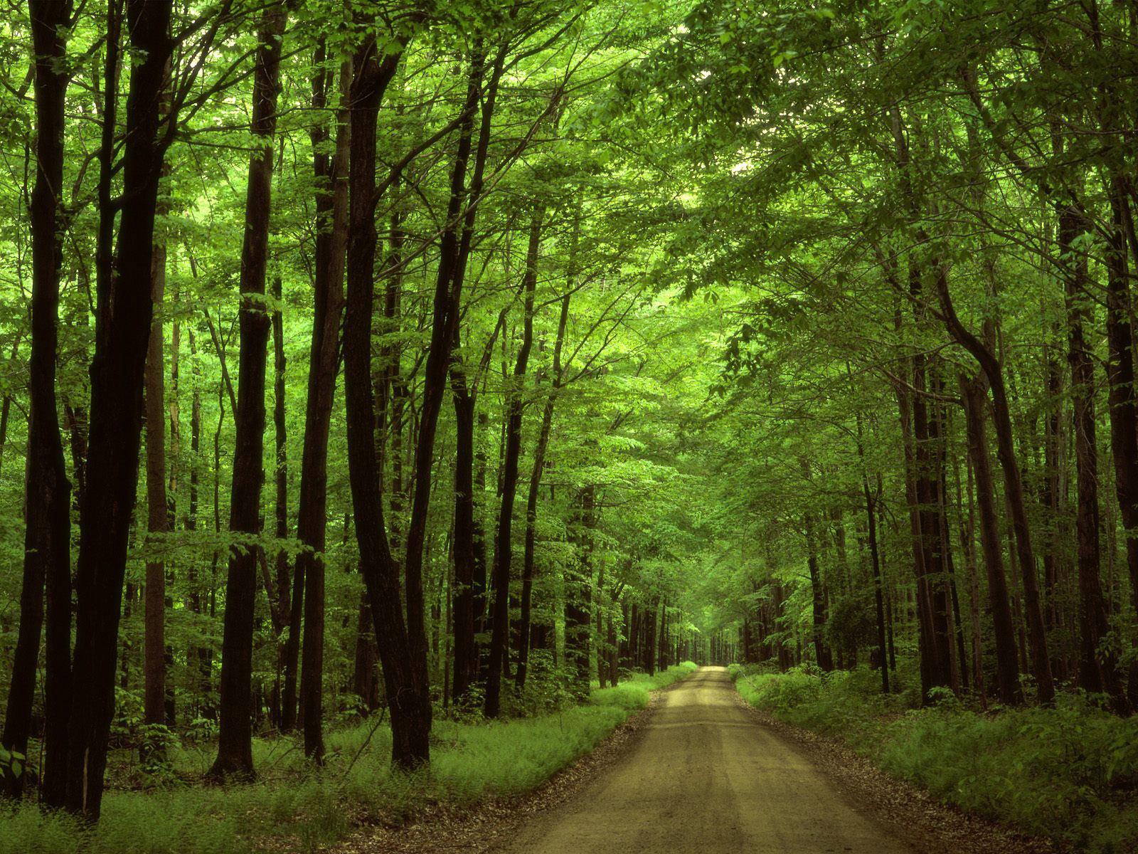 Forest Road Wallpapers - Salon des Refusés