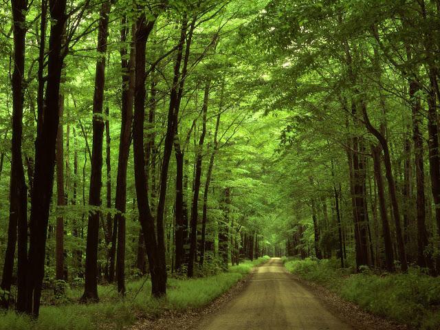 hutan hijau