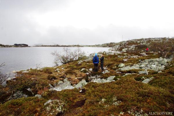 aliciasivert, alicia sivertsson, alicia sivert, fjällvandring, vandra i fjäll, fjällen, fjällvandra, vemdalen, vemdalsskalet, hike, hiking in sweden, härjedalen, norrland, sverige, varggranshågna, varggranssjön, varggransstugan