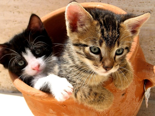 Cats and Kittens and Dogs and Puppies