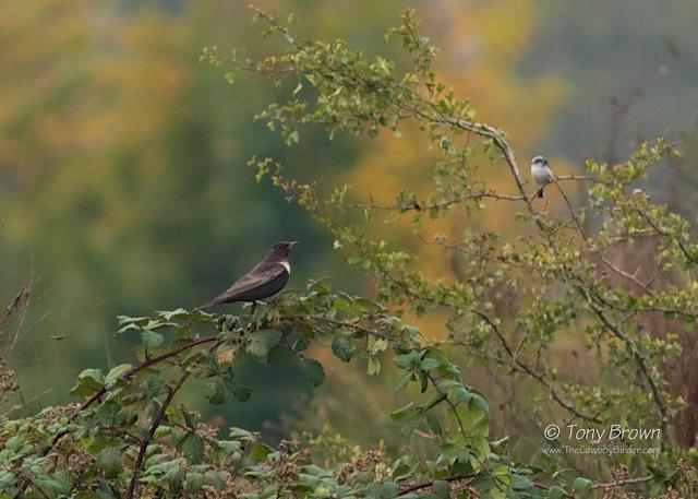 Wanstead, autumn, male