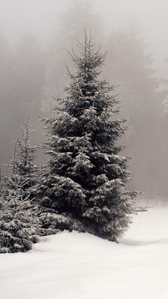 Hình nền mùa đông rất đẹp cho iPhone