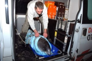 resgate de animais