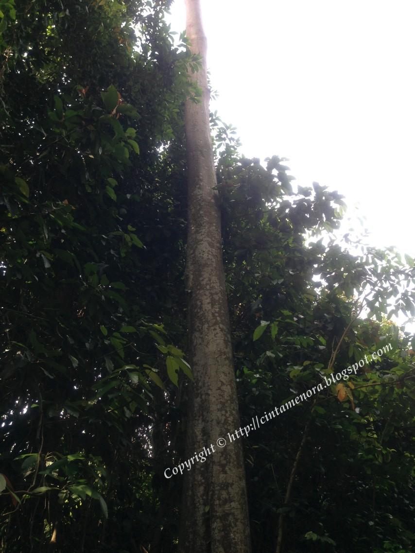 pokok yang menitiskan air hujan