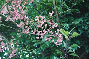 田舎暮らし格安物件に咲く花