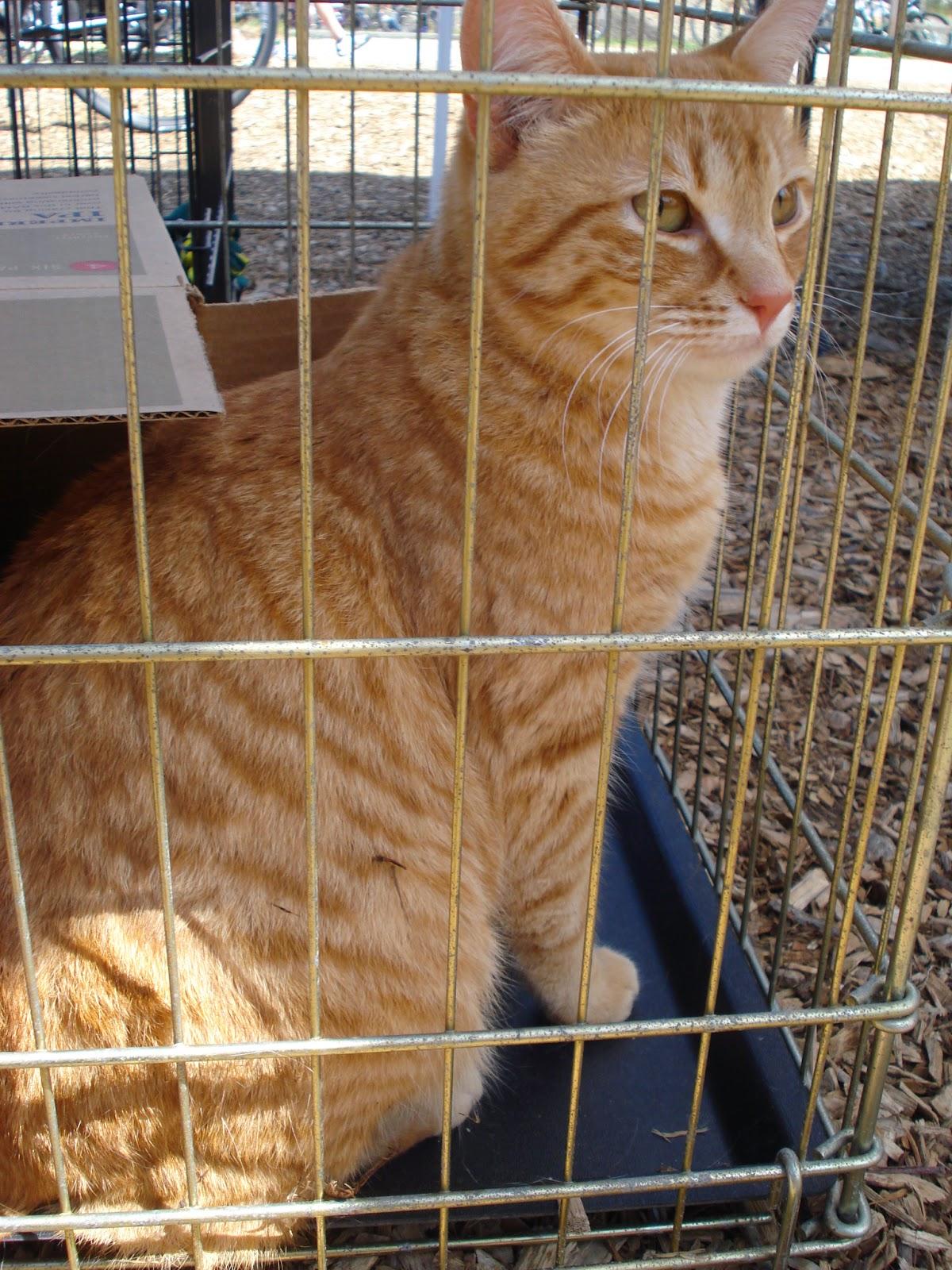 Cat Haven Rescue Tampa