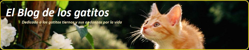 El blog de los gatitos