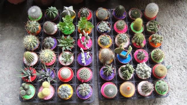 plants and animals. Black Bedroom Furniture Sets. Home Design Ideas