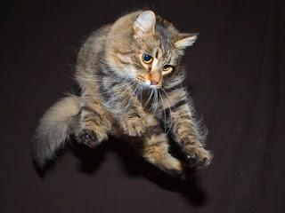 أسرار غريبة عن القطط