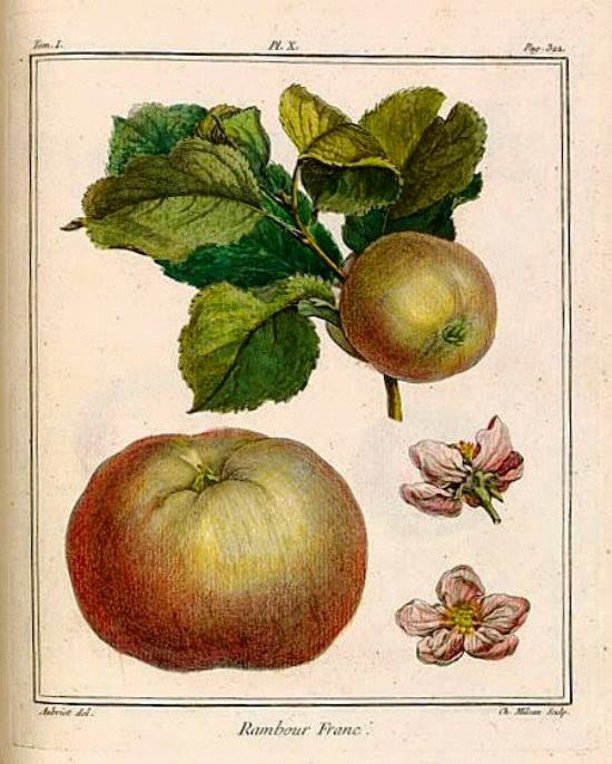 Tratado de los árboles frutales Henri Louis Duhamel du Monceau