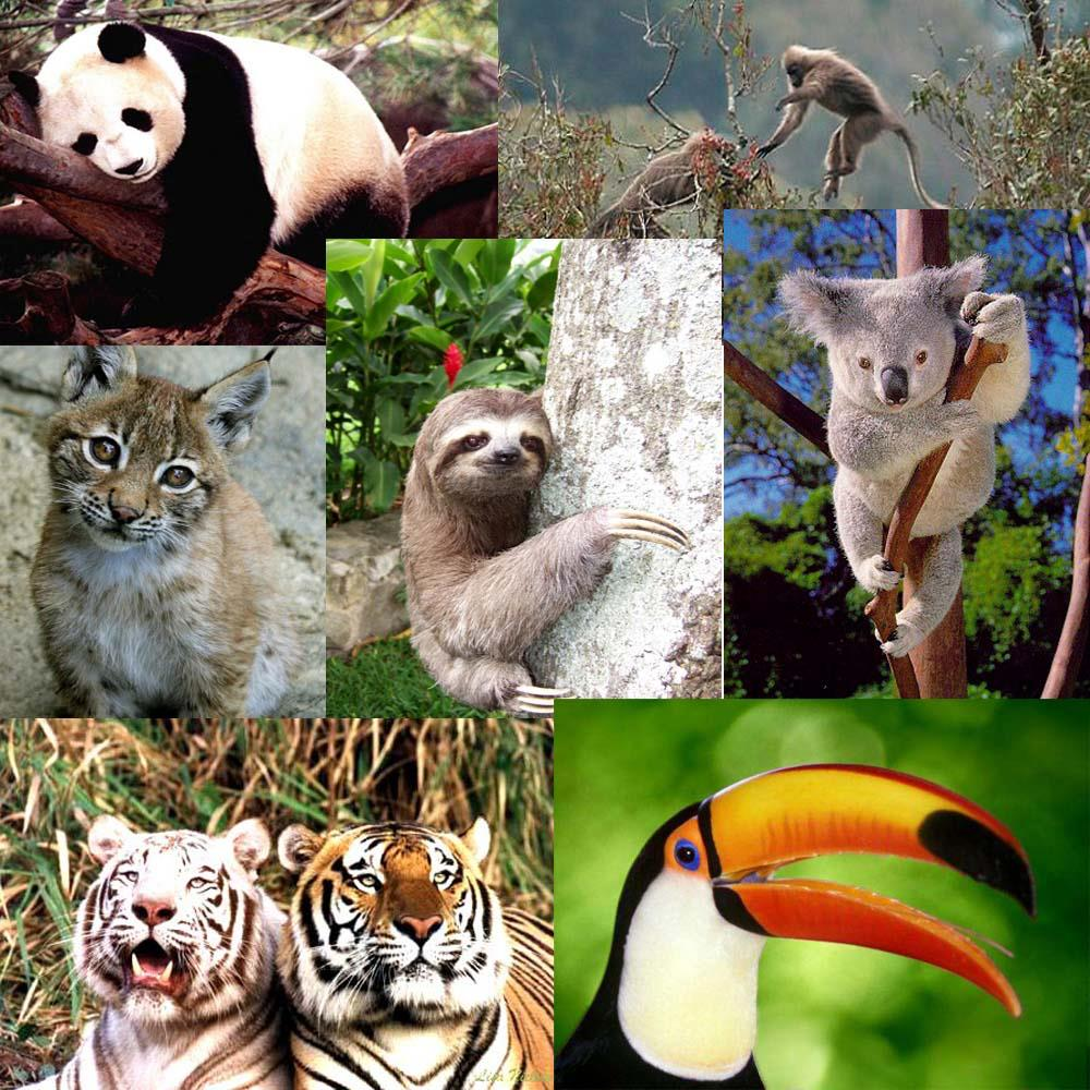 research paper on endangered animals Endangered species an endangered species is any plant or animal which is in danger of extinction throughout all or a significant portion of its range  there are animals and plants that can only been seen in paintings or early photography  it protects more than the threatened and endangered.